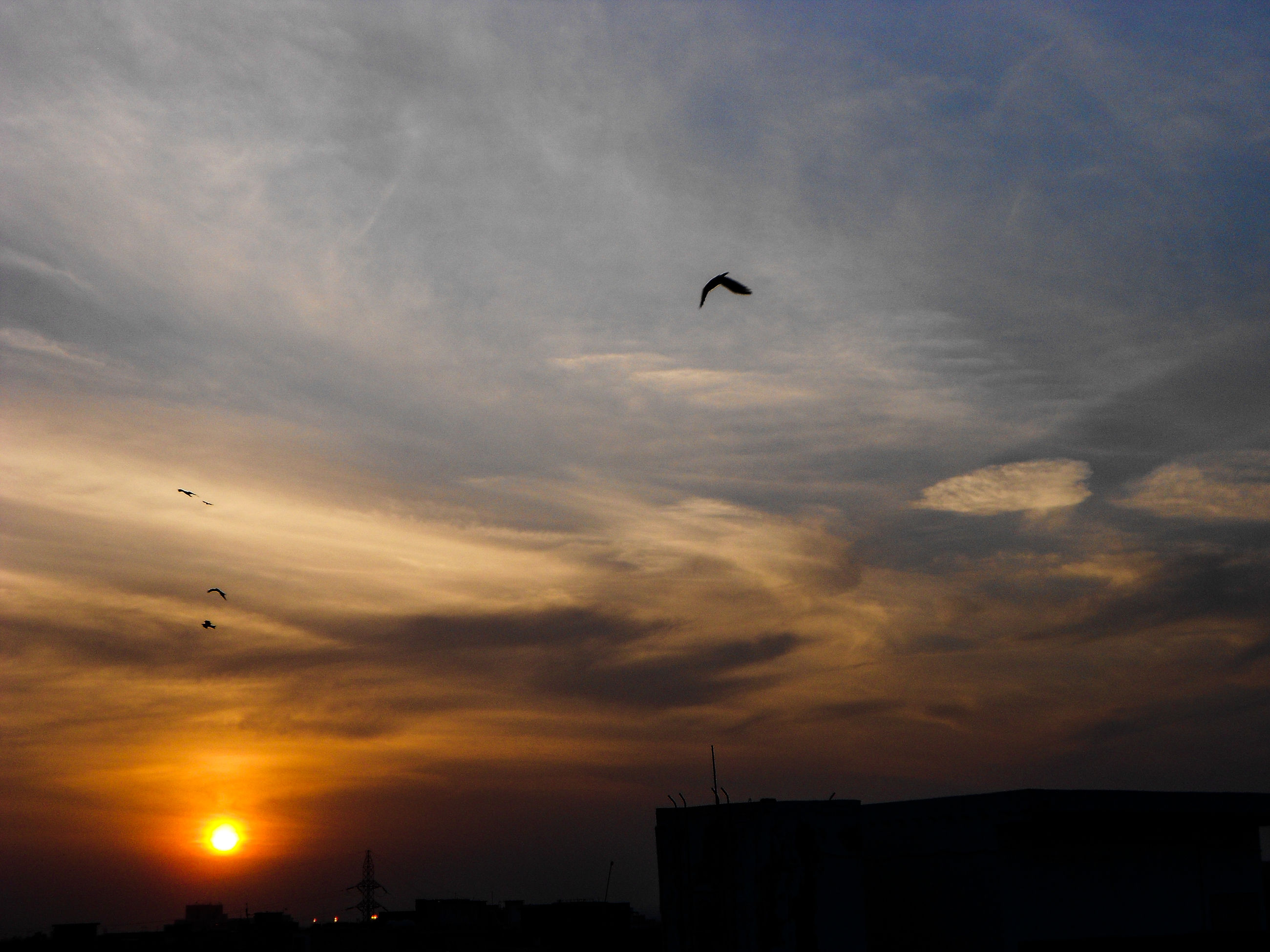 sky, cloud - sky, flying, sunset, silhouette, bird, animal themes, low angle view, no people, outdoors, building exterior, nature, architecture, scenics, beauty in nature, animals in the wild, day