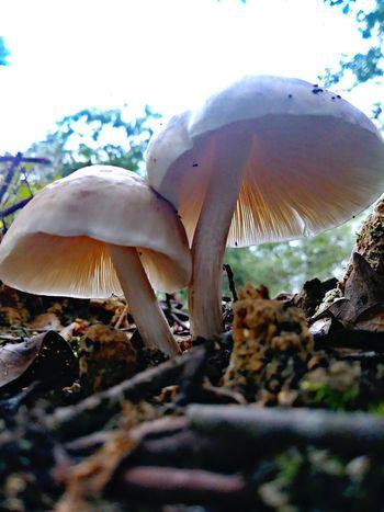 Toadstool Fungus Mushroom Close-up Plant Life