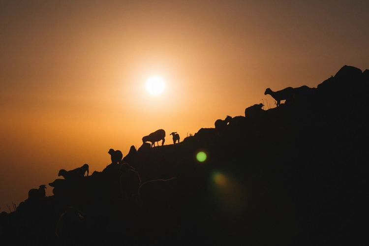 Low Angle View Of Silhouette Sheep On Mountain Against Orange Sky