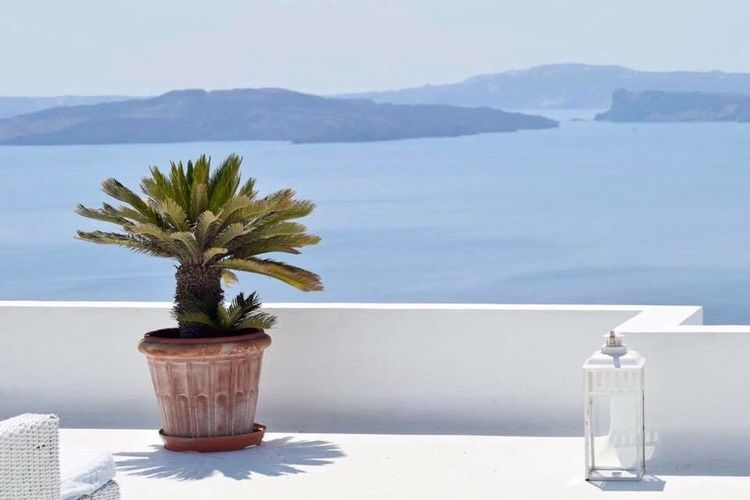 Potted plant on table by sea against sky