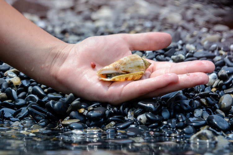 Close-up of hand holding crab on pebbles