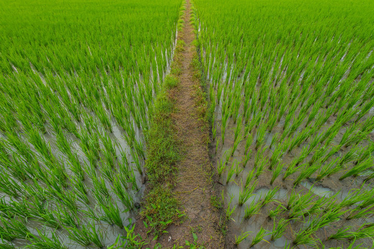 Full frame shot of crops growing on field