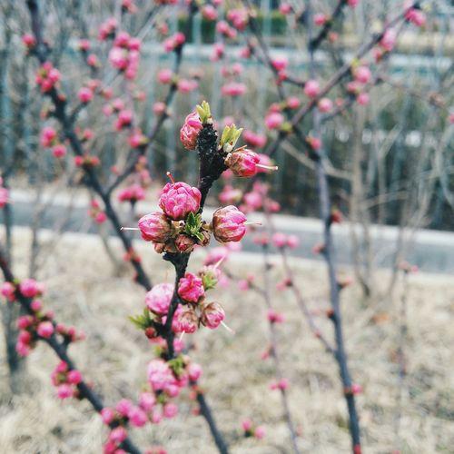 Spring buds Spring Vscocam SpringBuds Korea Seoul Ewha Womans University Latespring