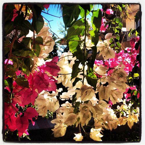 Flowers, fall