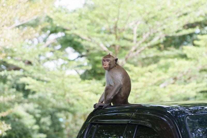 Monkey sitting on tree against plants