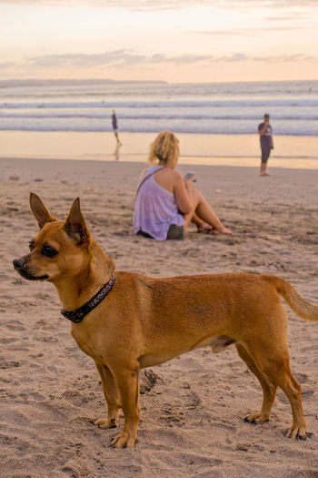 Side view of dog at beach