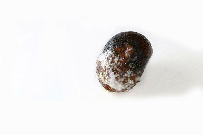 Fungus Fungi Grapes Rotten