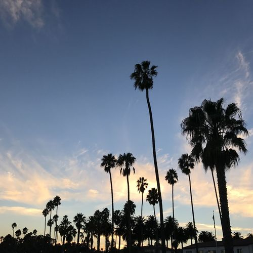 California Coastal Sunset Coastal Scenery Palm Tree Leaves Palm Trees On The Beach Nature Santa Barbara, CA Beauty In Nature Cloud - Sky Coastal Feature Nature Ojai Ojai California Palm Tree Palm Tree Silhouette Palm Trees Scenics Silhouette Sky Sunset Tranquility Travel Destinations Tree Tree Trunk