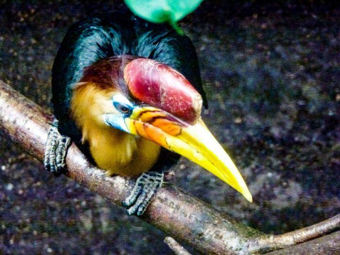 Bird Zoo Exotic