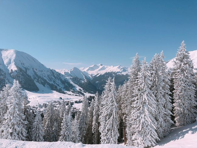 Snowy mountains Skiing Sun Snow Cold Temperature Winter Mountain Nature Scenics Beauty In Nature Outdoors No People Mountain Range Pine Tree Clear Sky Tree Tranquility Tranquil Scene Blue Frozen Landscape Day Copy Space