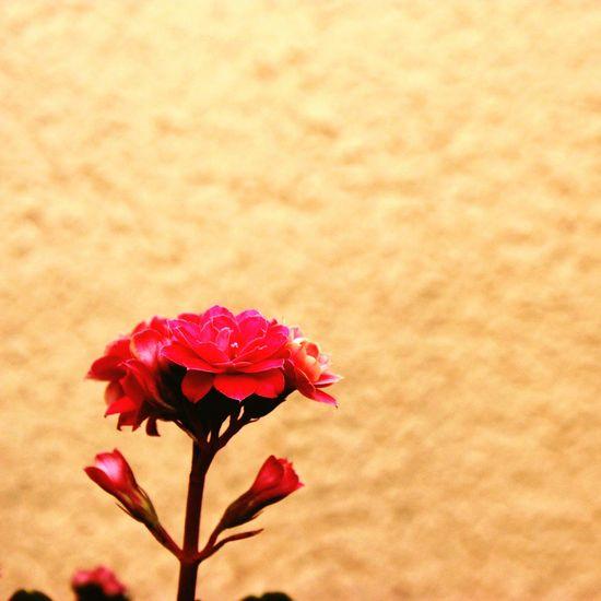 Flower Nature Flower Yellow Color Garden