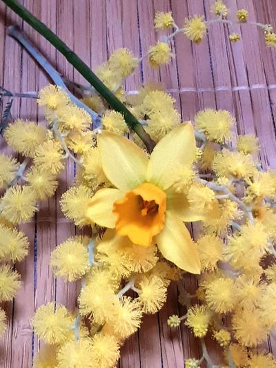 Flower Head Flower Yellow Petal Springtime Close-up Plant International Women's Day 2019