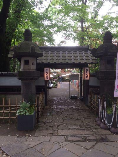 A poeny garden ueno-toshogu