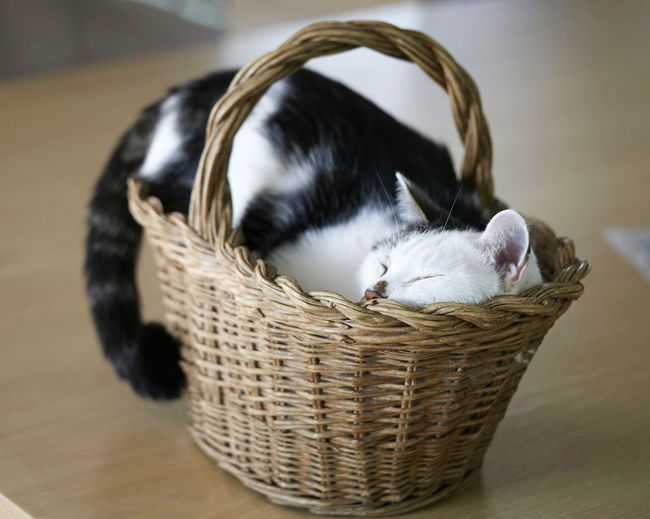 Close-up of cat sleeping in basket