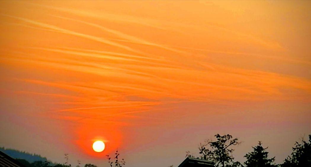 Tree Sunset Multi Colored Rural Scene Silhouette Orange Color Dramatic Sky Sky Cloud - Sky