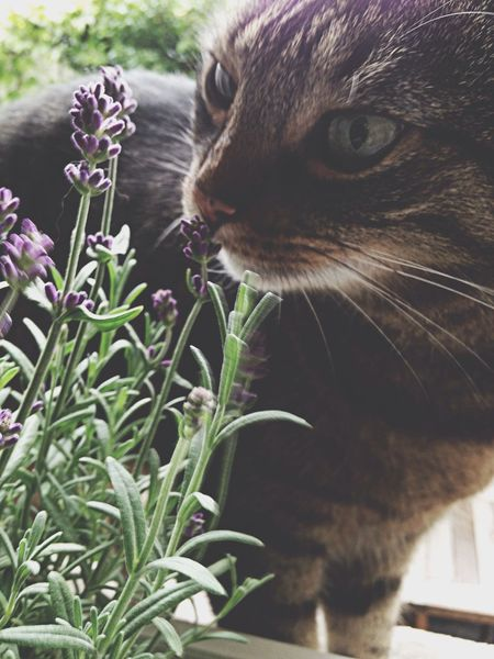Tadaabestshot thank you so much dear Anna :)) It's not easy to decide : but I love lavender and of course my cat Tadaa Community Tadaakitties Catlovers so here it is! Pets Corner