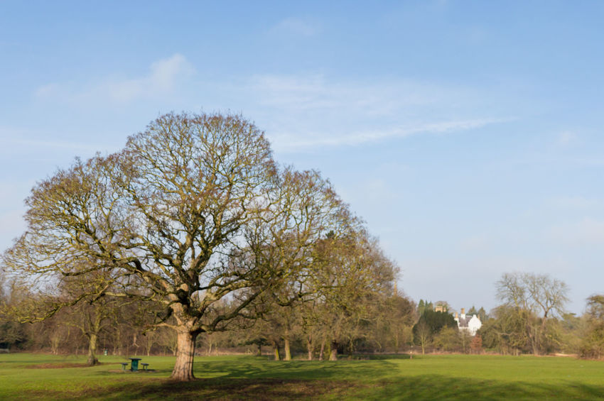 Countryside / Parks in my local area in England Blue Sky White Clouds Countryside Uk Day Daytime Photography Green Grass 🌱 No People Outdoors Outside Parks Plants 🌱 Rural Scene Sky Tree