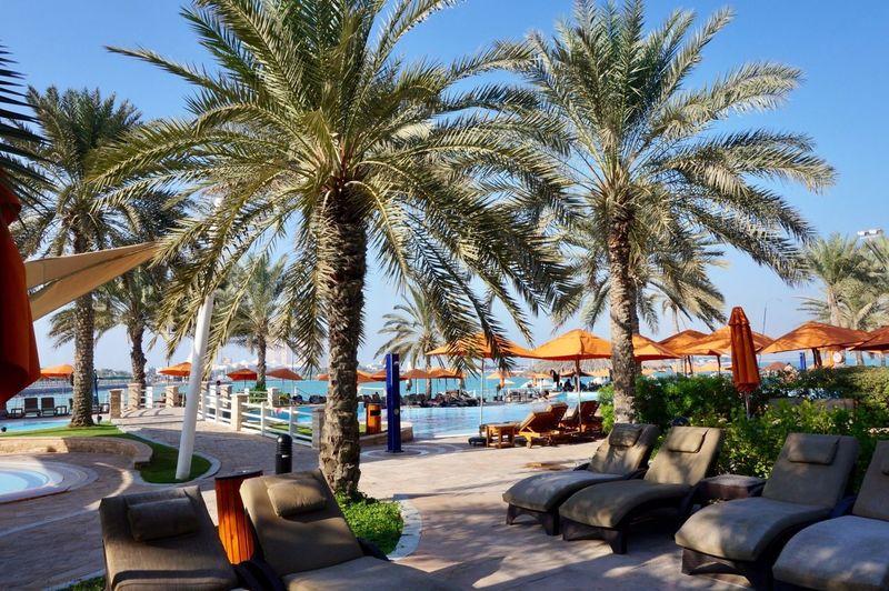 🏊♀️🌊🌺 HiltoniaBeachClub Abu Dhabi Beachlife Pool Chlorine Swimming Palm Tree Paradise Photography Photooftheday Picoftheday Outdoor Poolside Leisure Activity Sea
