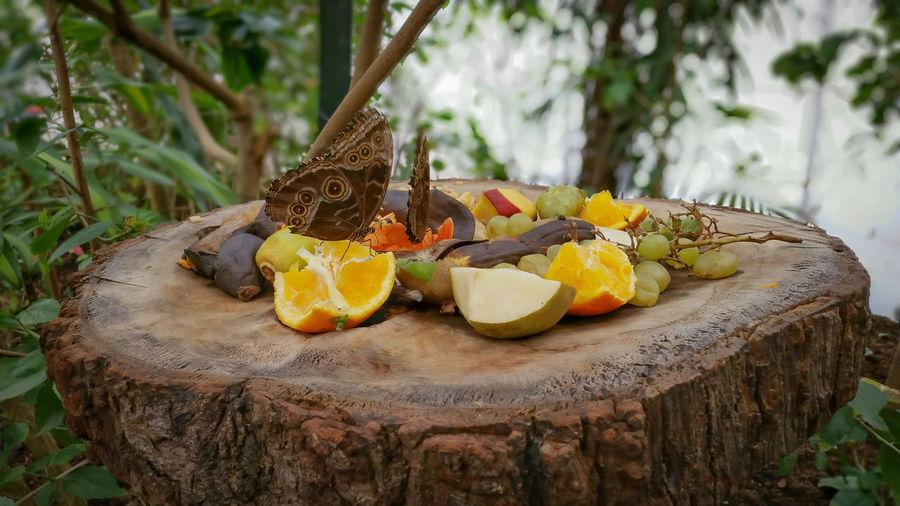 Close-up of butterflies on rotten fruits