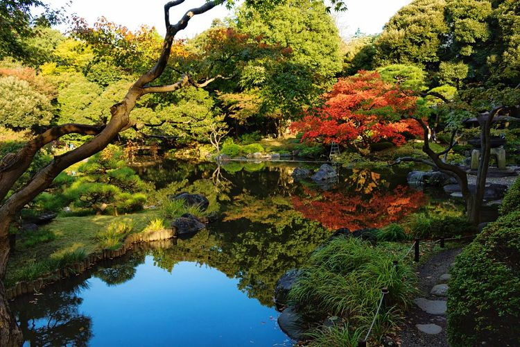 Japanese Garden Reflection Beauty In Nature Outdoors Lake Japanese Traditional Japan_daytime_view Travelgram Travel Destinations Travel Destination Japan Photography Travelblog Travelblogger Exploring Asia The Week On EyeEm Travel Photography Effeintravel 紅葉 Falls Japan_daily_pic EyeEm Selects Icu_japan Nature Reflections In The Water Ig_japan