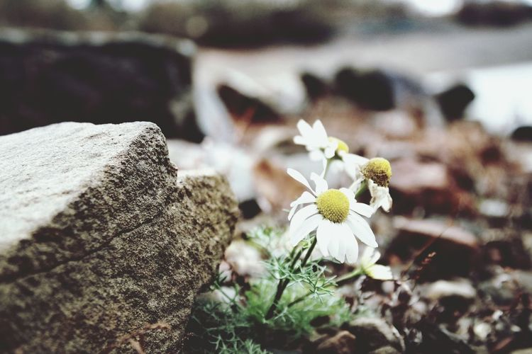 survived Edersee Germany Nature Photography Macro Beauty Macro Photography Winter My Point Of View My Place To Relax Foggy Morning Flower Head Flower Uncultivated Close-up Wildflower Plant Life