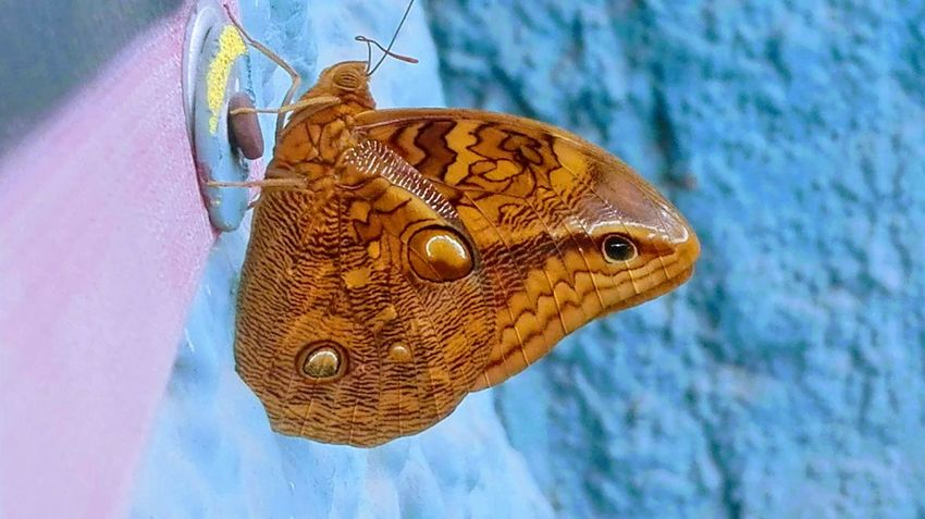 2-1 Butterfly - Insect Snake Caprichosa Naturaleza Self Perspective Close-up Animal Skin
