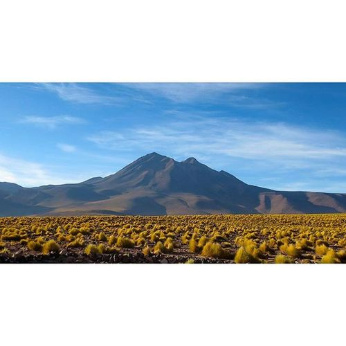 Bolivian Altiplano! This photo was taken by my brother and his gf (Jerold & Erin) on their travels to South America! A truly stunning contrast of blue skies and yellow plants :) Bolivia Altiplano Bolivianaltiplano Travel vacation vacay southamerica Jerold&Erin photography landscape ineedtogetoutofhere