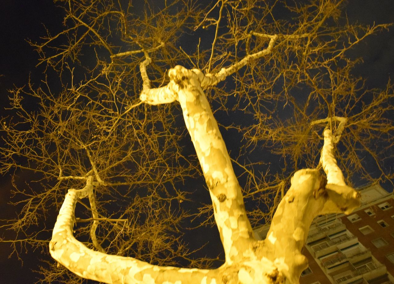 no people, night, close-up, illuminated, low angle view, outdoors, nature, branch