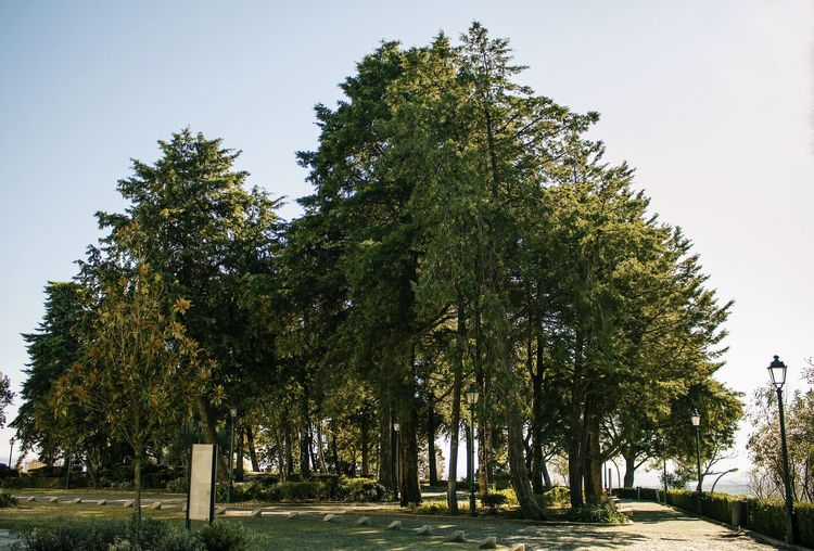 Low angle view of trees in park against clear sky