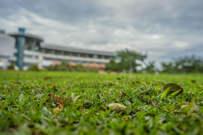 Surface level of grass on field against sky