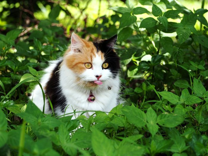One Animal Domestic Cat Pets Animal Themes Grass Domestic Animals Nature Mammal No People Outdoors Feline Day Cat Cats Of EyeEm Cats Cats 🐱 Nature Photography Green Beauty In Nature Natural Light Portrait EyeEm Indonesia