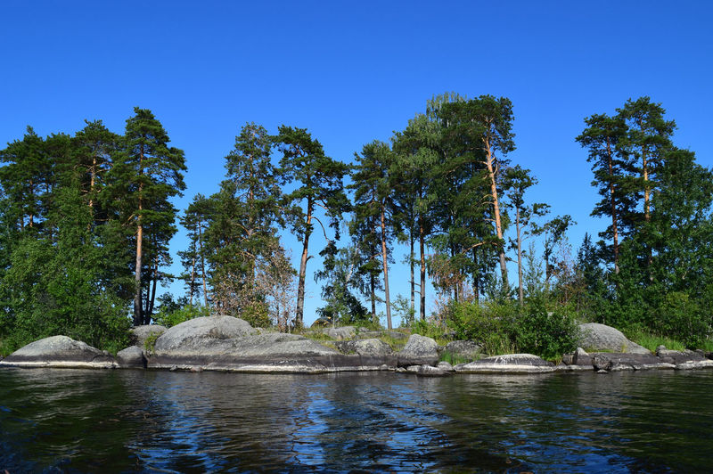 Tree Water Plant Nature Day No People Beauty In Nature Waterfront Scenics - Nature Tranquility Rock Tranquil Scene Sky Clear Sky Animal Wildlife Blue Animal Themes Solid Outdoors Pine Tree Lakeside Vuoksa Travel Destinations Reflections In The Water Trees