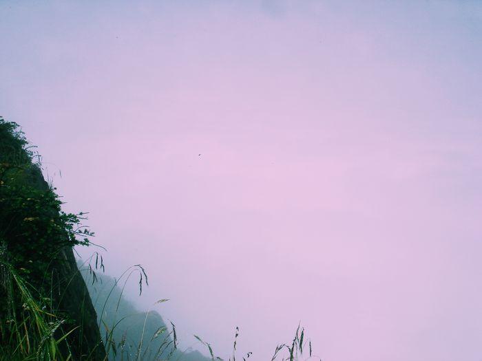 Sky Pink Color