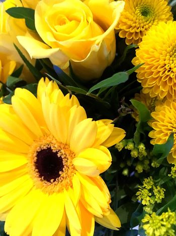 Flower Fragility Petal Yellow Beauty In Nature Freshness Flower Head
