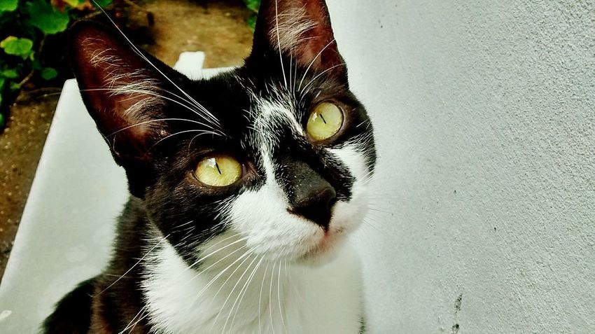 Close-up Indoors  Day Looking At Camera Feline Domestic Cat Domestic Animals Animal Themes Portrait Pets One Animal Water No People