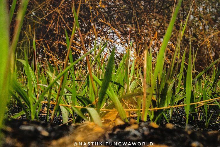 Paint The Town Yellow Nastiikitungwaworld Anastakitungwa Beauty In Nature Nature Plant Flower Day Nikon D3000