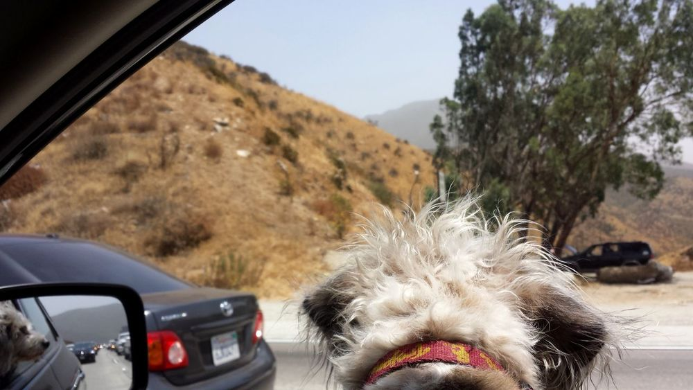 ON VACATION WITH MU HUMAN Dog Dog Days Dog Life Dogs Dogs Life Dogslife Mode Of Transport On The Go  On The Road On The Way Pets Road Trip Road Trippin It! Road Trippin' Road Tripping Scenic View Window View
