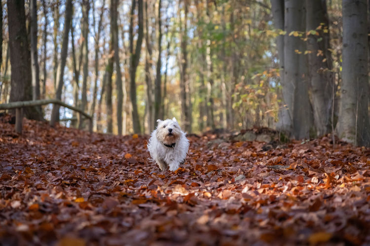 Portrait of a dog in forest