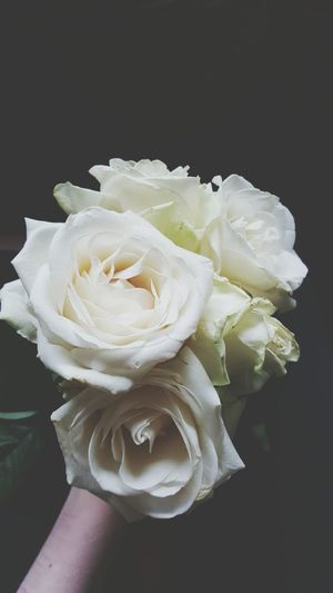 Close-Up Of Hand Holding Bouquet Of White Roses