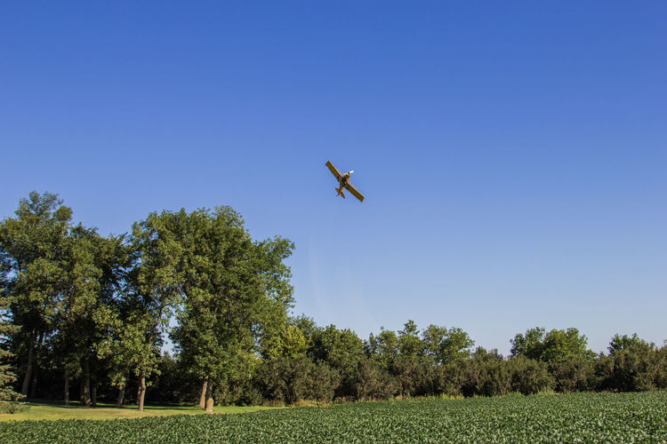 Crop duster spraying soybeans. Agriculture Airplane Beans Blue Blue Sky Canon60d Canonphotography Clear Sky Crop Duster Crop Dusting Farm Field Flying Green Growth Plane Sky Soybean Spraying Tree Turning