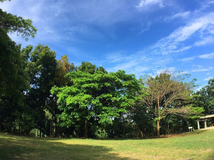 Tree Growth Nature Sky Blue Green Color Beauty In Nature Scenics Outdoors Day