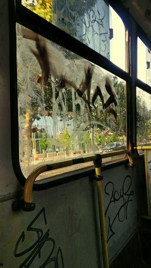 Por favor si quiere que su expresion artistica sea como tal, no raye descomunalmente los buses Window Day Noturban Thebus NotArt