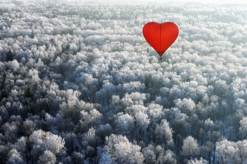 Heart shape hot air balloons flying over forest