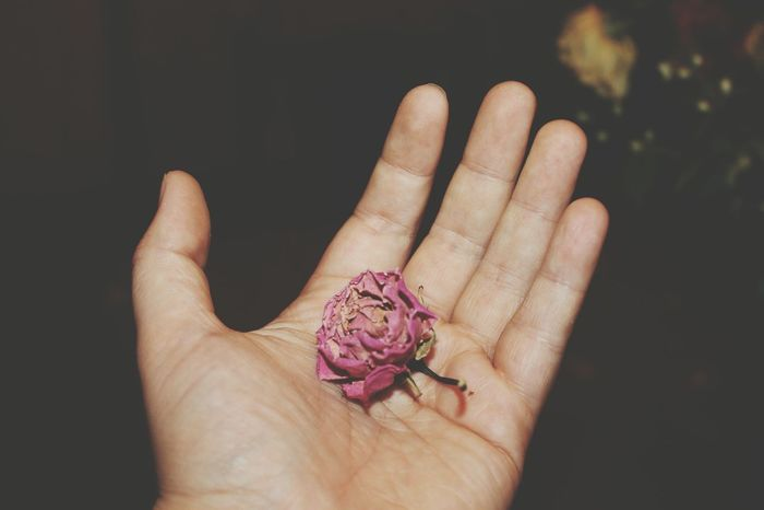 Death Rosé Dry Flower  Dead Flowers Red Rose EyeEm Selects Human Hand Black Background Holding Flower Females Close-up Palm Fingerprint Human Finger