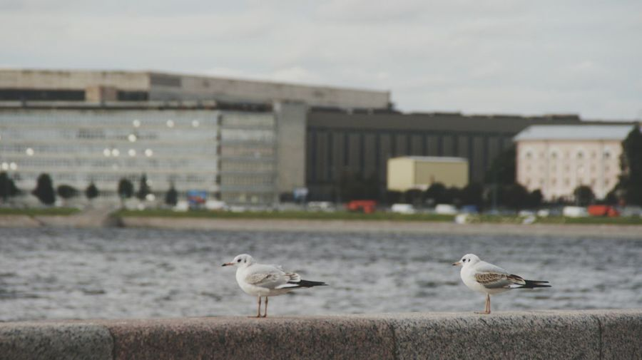Seagulls perching on riverbank against sky