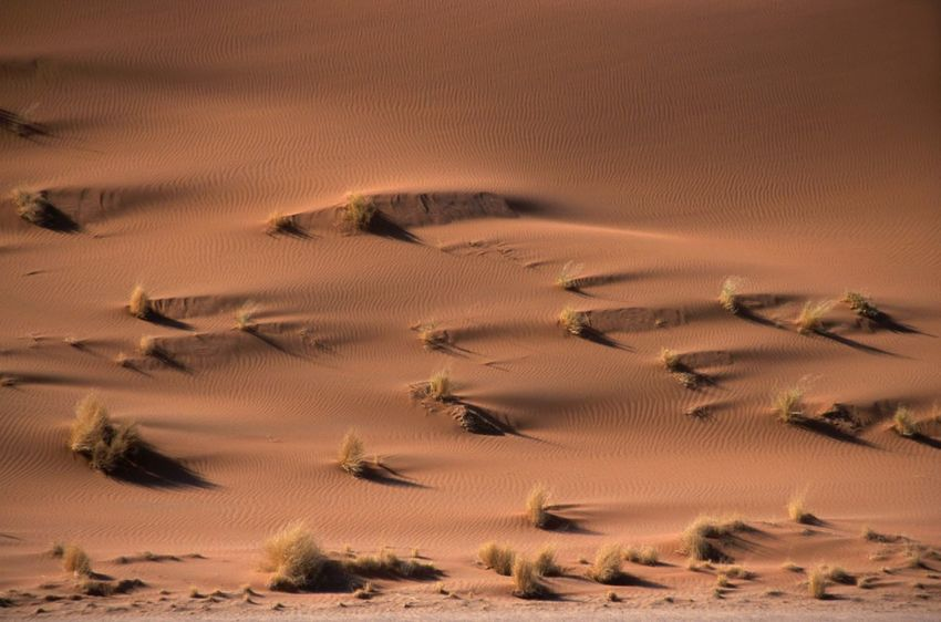 Texture Colour Of Life Colors Herbs Africa NamibiaPhotography Namibia Landscape Sesriem, Namibia Namib Desert Naukluft National Park Wind On The Sand Outdoors Beauty In Nature Desert Sand Sand Dune Landscape Nature