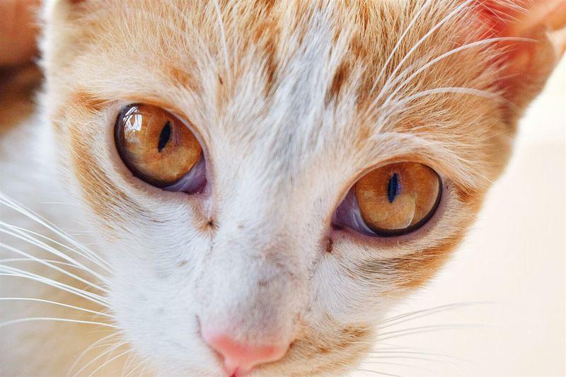 Animal Cat Catlover Cateyes Photography The_nikon_ Animalphotography Follow Like Animals
