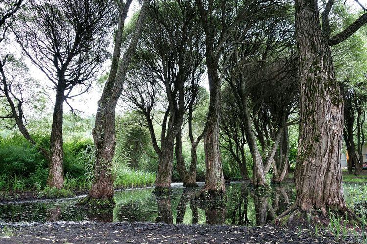 деревья болото зловещееболото Деревья, горизонт, дорога деревьявболоте Лес лес и природа леснаясказка волшебныйлес Красоты природы