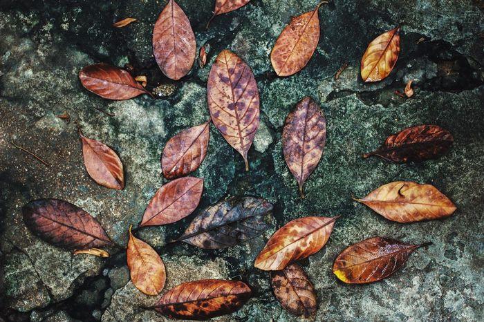 Leaves Wallpaper Art Asian  Rainy Days