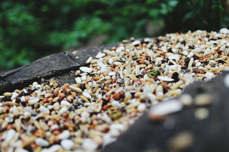 Close-up of seeds on rock